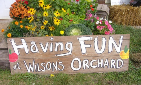Omega Chi Fall Event: Wilson's Apple Orchard promotional image